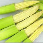 jagung muda